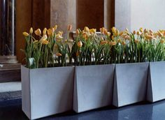 plantenbakken voor kantoor - Google zoeken