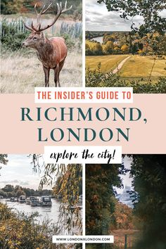 Discover Richmond, London with this insider's guide. From Richmond Park to gorgeous views over the Thames, discover the best things to do, best bars and restaurants and shopping spots in Richmond - one of London's prettiest areas #london #travel #uk Richmond Green, Richmond London, Richmond Park, Travel Uk, London Travel, Royal Park, Things To Do In London, London Life, Cool Places To Visit
