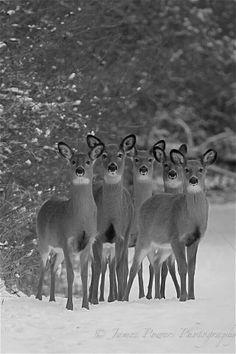 Ragazzi, pronti per la foto di gruppo? Cheese. ..