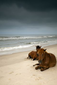 Ponies on the beach.