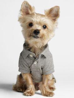 Hehehe! He looks like a little man! Too cute!