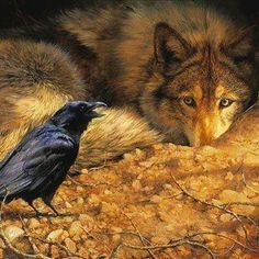 The raven and the wolf