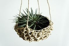 """""""Isn't it difficult to live with a hanging plant?"""" Julie asked me the other day. Depends on the planter, I said."""