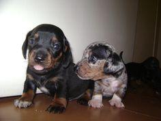 Lucky & Biju