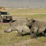 8 Day Safari to Serengeti,Tarangire and Ngorogoro Crater, We use well maintained and extended Toyota Land Cruisers with roof hatches for unobstructed and up-close game-viewing.All our safaris inclu...