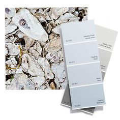 Color Palette  inspired by crushed oyster shells