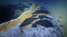 Hace poco más de un mes os hablaba en este blog de las andanzas de un equipo de biólogos marinos, que están explorando las aguas del Golfo de Mexico con la ayuda de un pequeño submarino que dirigen por control remoto. El EVNautilus, nos sorprendió en aquella ocasión captando imágenes de una adorable