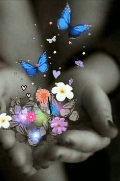 Discover & share this Animated GIF with everyone you know. GIPHY is how you search, share, discover, and create GIFs. Beautiful Flowers Wallpapers, Beautiful Gif, Beautiful Butterflies, Beautiful Roses, Butterfly Gif, Butterfly Pictures, Butterfly Wallpaper, Gif Bonito, Beau Gif