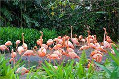 Poster Flamingo Family