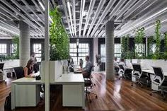 Image result for plants office screen