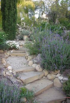 Provence Style Garden Path - edged with lavender, candytuft and cypress trees - via Trouvais