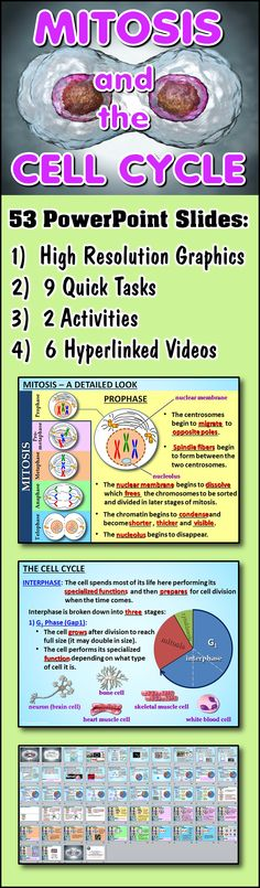 This 53 Slide Interactive Mitosis and Cell Cycle PowerPoint with 8 Pages of Student Notes will engage your students with various quick tasks, activities as well as hyperlinked videos.  The key to keeping students interested and on task is to give them a well designed lesson that invites their participation and contains multi-media features that will enrich their learning.