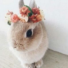 A beautiful flower wreath for a beautiful bunny - Süße tiere - Adorable Animals Cute Creatures, Beautiful Creatures, Animals Beautiful, Beautiful Images, Majestic Animals, Animals And Pets, Funny Animals, Cute Baby Bunnies, Cute Little Animals