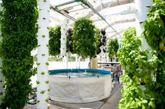 I was there in September when I went down to the aquaponics association conference.  I learned a lot that day and I was impressed by this rooftop garden.  This was a very intense and technological setup, way more than what is needed but was still a very cool set up.