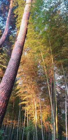 Trunks, Plants, Drift Wood, Stems, Tree Trunks, Plant, Planting, Planets