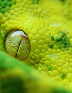 God's in the details. That is one of the coolest macro shots I've seen!