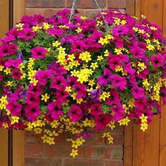 Biddens and petunias are one of our favorite combinations for hanging baskets! www.custom-landscaping.com