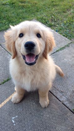 This what I think our puppy will look like and I am so super excited!!!