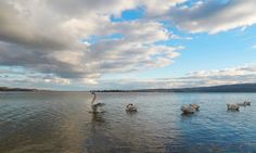 The Swans of Lake Constance by Marc Kunze on 500px