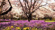 Park Flowerbed Flowers