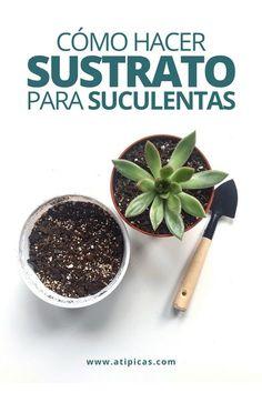 Succulent Arrangements, Succulents Garden, Garden Cactus, Suculentas Interior, Suculent Plants, Growing Greens, Vintage Garden Decor, Plants Are Friends, Mediterranean Garden