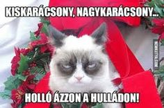 Funny Christmas Memes Hilarious Grumpy Cat Ideas For 2019 Funny Merry Christmas Memes, Funny Christmas Captions, Grumpy Cat Christmas, Funny Christmas Pictures, Christmas Humor, Funny Pictures, Christmas Images, Christmas Sayings, Christmas Wishes