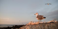 Essaouira by Salvador Martin Yeste on 500px