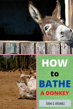 Minature Donkey, Donkey Donkey, Baby Donkey, Mini Donkey, Raising Ducks, Raising Chickens, Farm Lifestyle, Mini Farm, Hobby Farms