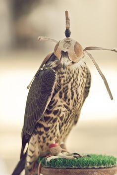 Falconry France