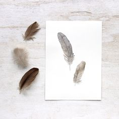 Two Sparrow Feathers - Original Watercolor