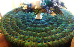 I just found something to do with all those peacock feathers I have...hello new coffee table!! I think this is stunning!!!!