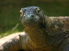 Top 10 most popular reptiles (and why it matters)