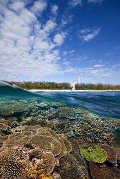 Discover the Beauty and History of Lady Elliot Island #Queensland #Australia http://www.tripadvisor.com.au/ShowForum-g255067-i460-Queensland.html
