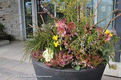 04-Spring 2012-Paul Zammit Orange Plant, Public Garden, Botanical Gardens, Container Gardening, Planters, Spring, Color, Red, Ideas