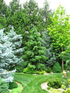 transition to forest landscaping Evergreen Garden, Evergreen Landscape, Forest Landscape, Landscape Borders, Garden Trees, Garden Borders, Landscape Plans, Garden Shrubs, Shade Garden