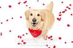 Pet Photography Valentine's Day