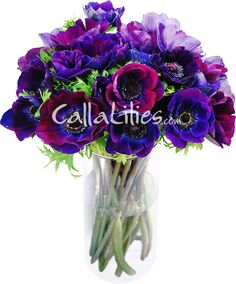 ...Violet/Purple Anemones... Want these flowers incorporated in my bouquet