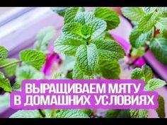 Мини-огород в квартире: как вырастить овощи, зелень и даже клубнику у себя дома - Лайфхакер