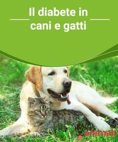 Il diabete in cani e gatti Il #diabete nei #cani e nei #gatti è una #patologia che sta aumentando nel mondo. #Salute
