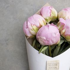 Our 'PEONY FRIDAY' Pre orders are selling super fast, pre orders are open until 12pm tomorrow or until sold out! See website for details xx #PEONY #peonies #blooms #bloomsocialnz #BSPEONYFRIDAY