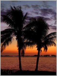 ✯ Sarasota, Florida  Sarasota is so pretty, love St. Armand's circle, great shops.