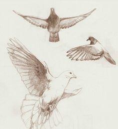 dove pigeon sketch joh 39 n tattoo pinterest colombe. Black Bedroom Furniture Sets. Home Design Ideas