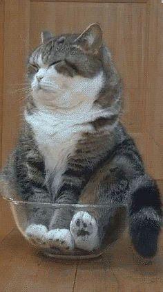 I like fat cats and i cannot lie <3