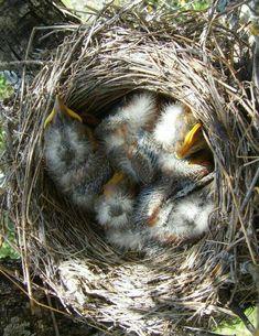 baby bird nursery