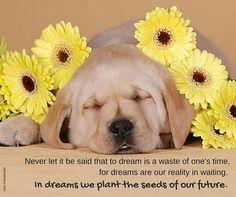 Labrador Quotes, Labs, Puppy Love, Labrador Retriever, Puppies, Animals, Labrador Retrievers, Cubs, Animales