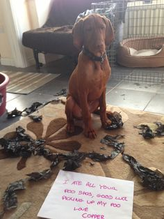 I ate all your poo bags, good luck picking up my poo. Love Copper
