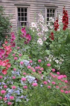 cottage gardens that are wonderfully wild, tumbling from their borders and beds!