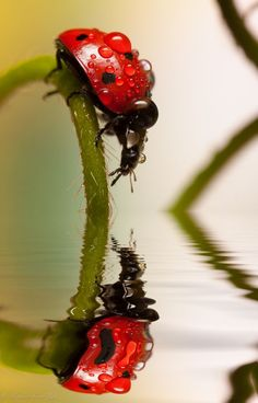 nice Macro photo of a ladybug by Alejandro Ferrer Ruiz via 123inspiration...
