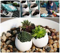 Des pots pour succulentes en coquilles d'oeufs