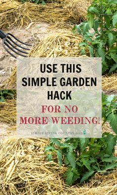 Tired of weeding your garden? If you love to garden but hate to weed, then this post is for you. My super simple and incredibly effective tip that will keep you out of your garden and off your needs this growing season. Organic Vegetables, Growing Vegetables, Growing Plants, Organic Gardening Tips, Vegetable Gardening, Urban Gardening, Gardening Hacks, Flower Gardening, Indoor Gardening